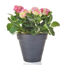 Hydrangea Floral Arrangements in Artisan Planter