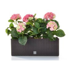 Hydrangea Floral Arrangements in Planter