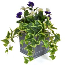 Pansy Floor Floral Arrangements in Planter