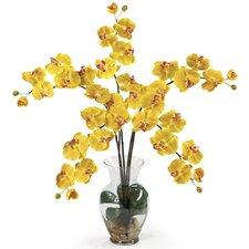Liquid Illusion Phalaenopsis Silk Orchid Flowers in Yellow