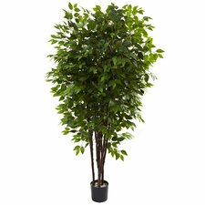 Deluxe Ficus Tree in Pot