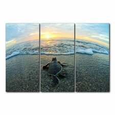 'Turtle' Framed 3 Piece Photo Graphic Print Set on Canvas