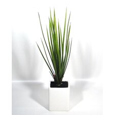Artificial New Zealand Flax Plant in Pot