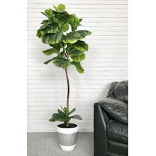 Fiddle-Leaf Fig Palm Tree in Pot