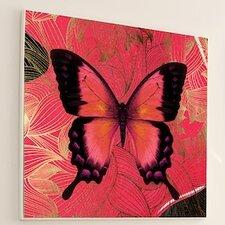 Metamorphosis Butterfly Graphic Art