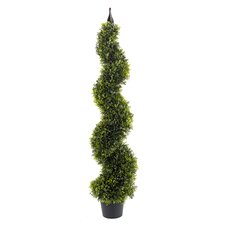 120cm Spiral Boxwood Topiary in Pot