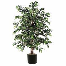Round Bush Tree in Pot