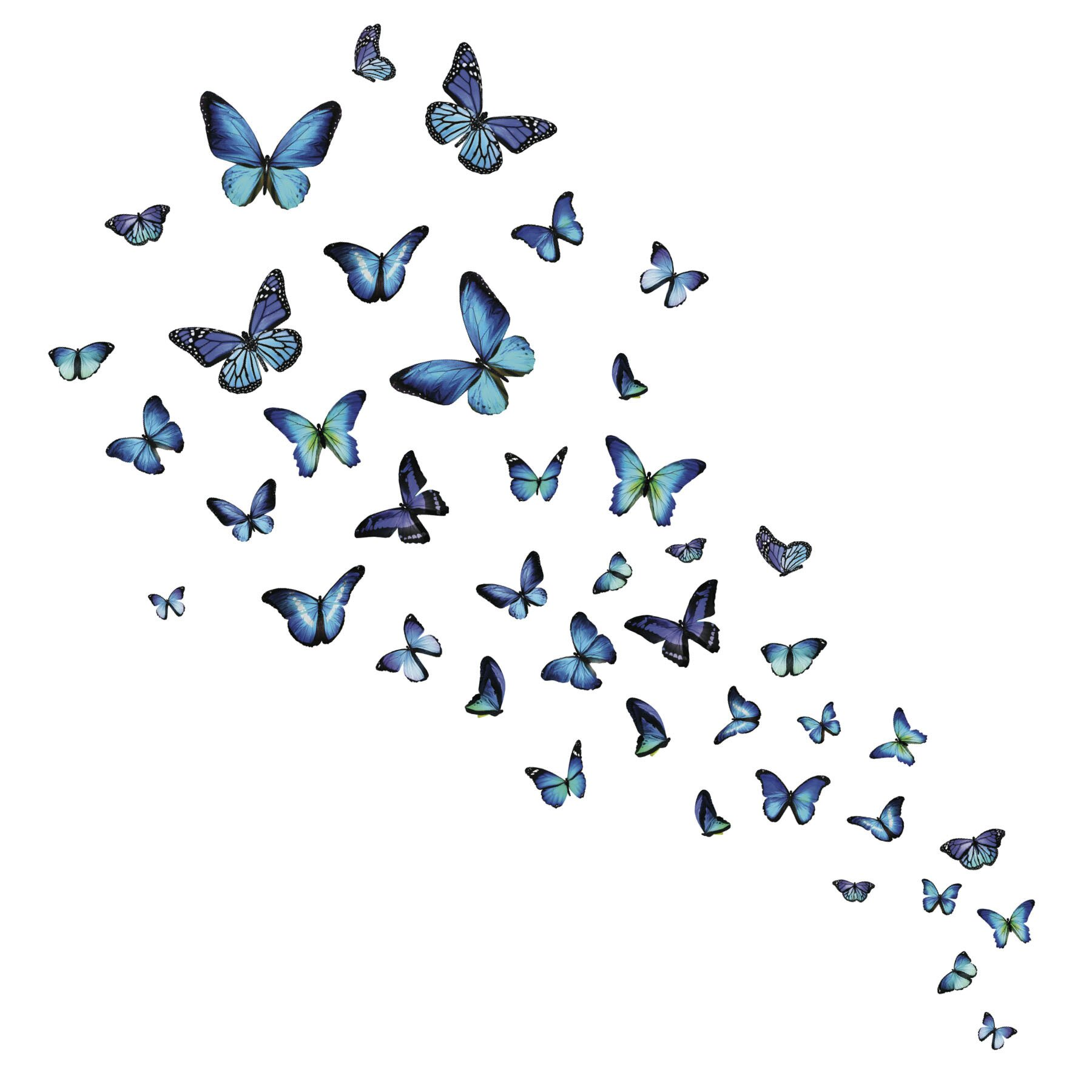 wallpops mariposa butterfly wall sticker wayfair co uk wallstickers folies butterfly flower wall stickers