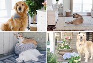 Pictures of Cute Pets in Chic Spaces