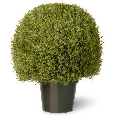 National Tree Co. Cedar Desk Top Plant In Pot U0026 Reviews Wayfair