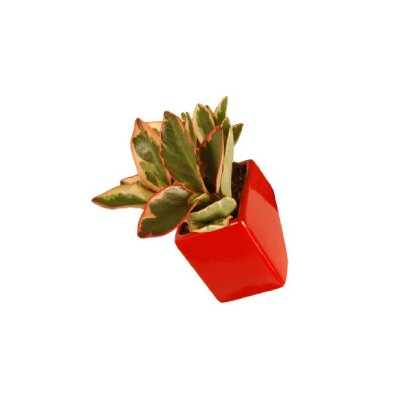 Arcadia Garden Products Urban Gardening Ceramic Wall Planter