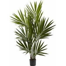 Kentia Palm Silk Tree in Pot