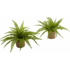 Boston Fern Desktop Plant in Planter (Set of 2)