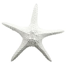 Cruz Starfish Wall Décor