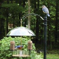 Supper Dome Bluebird Suet Bird Feeder