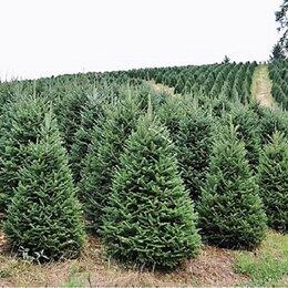 Artificial Christmas Trees You'll Love | Wayfair