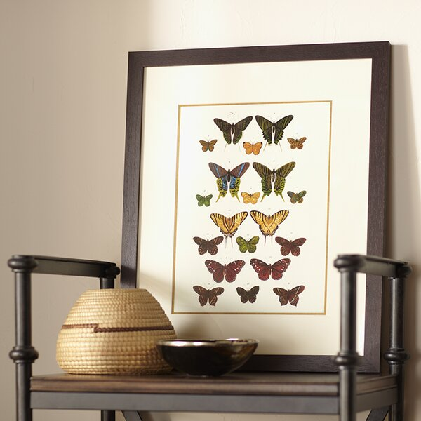 Birch Lane Papillon Framed Print Ii Amp Reviews Birch Lane