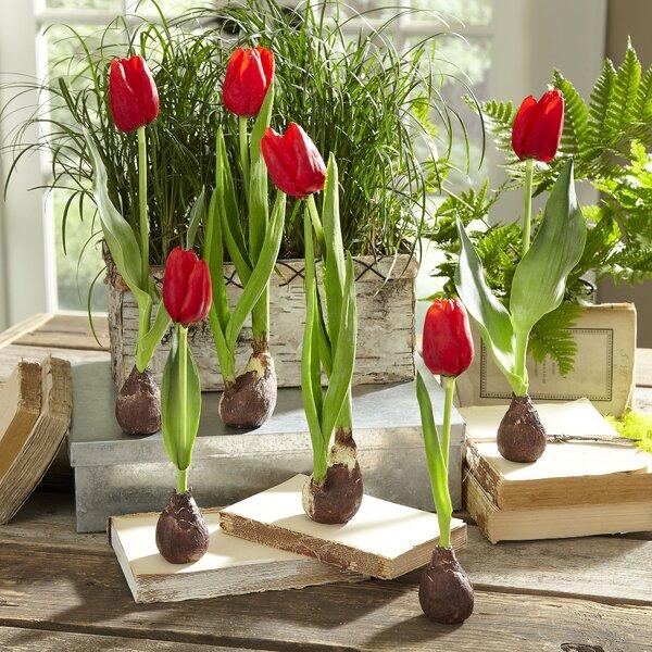 Birch Lane Red Faux Tulips Amp Reviews Birch Lane