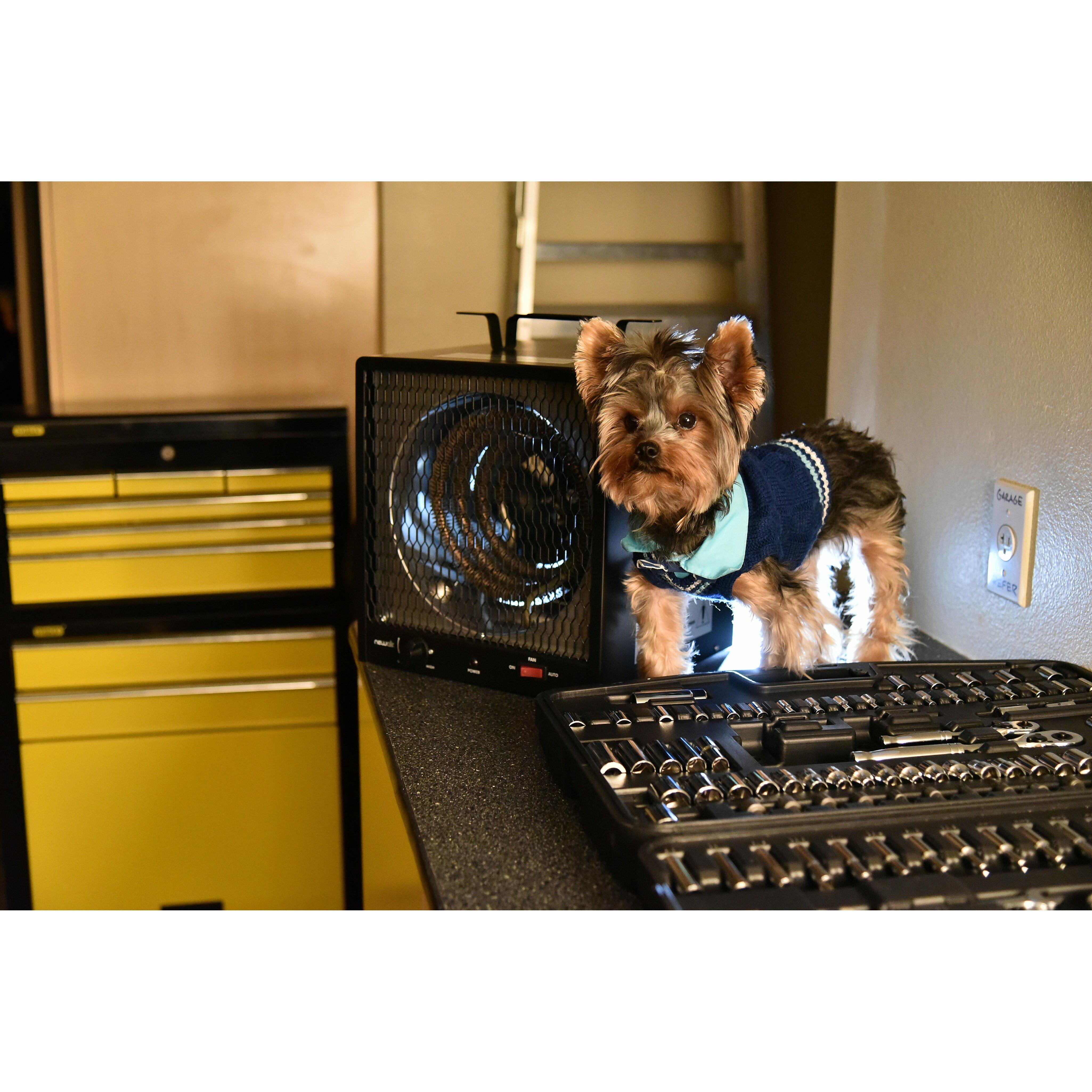 5,600 Watts Portable Electric Fan Compact Heater & Reviews | Wayfair