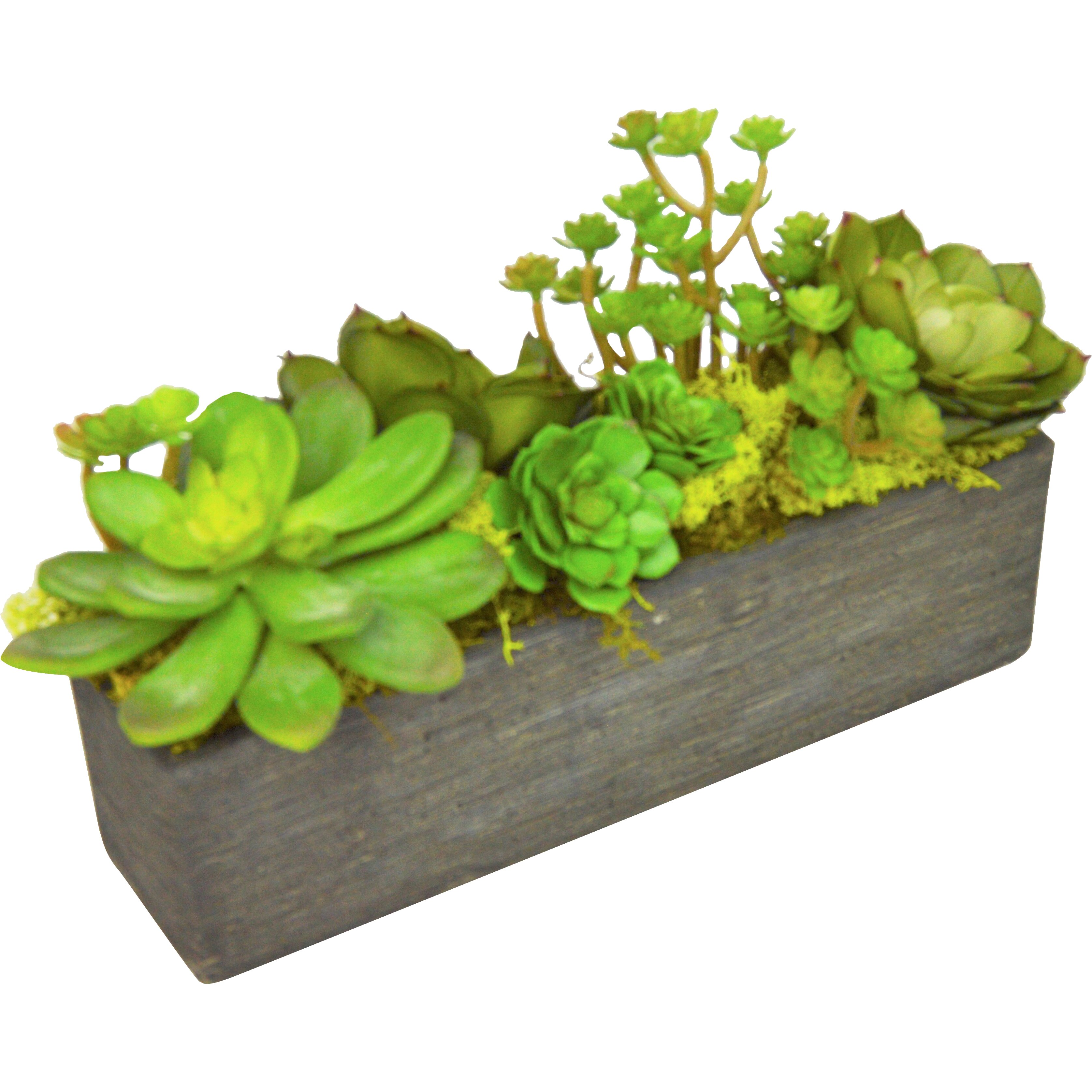 TC Floral Company Succulent Garden in Rectangle Box Reviews