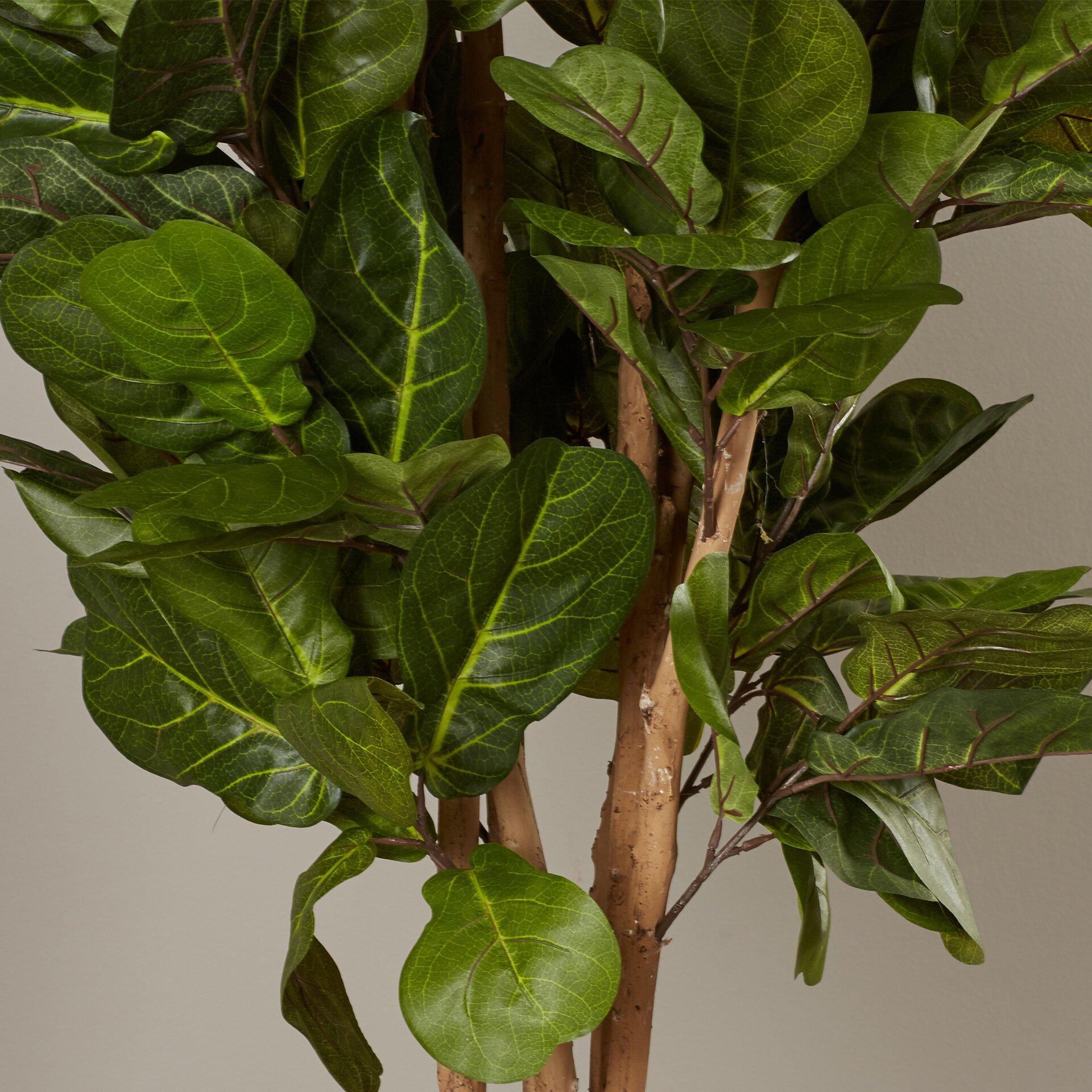 Brayden Studio Fiddle Leaf Fig Tree In Pot Amp Reviews Wayfair