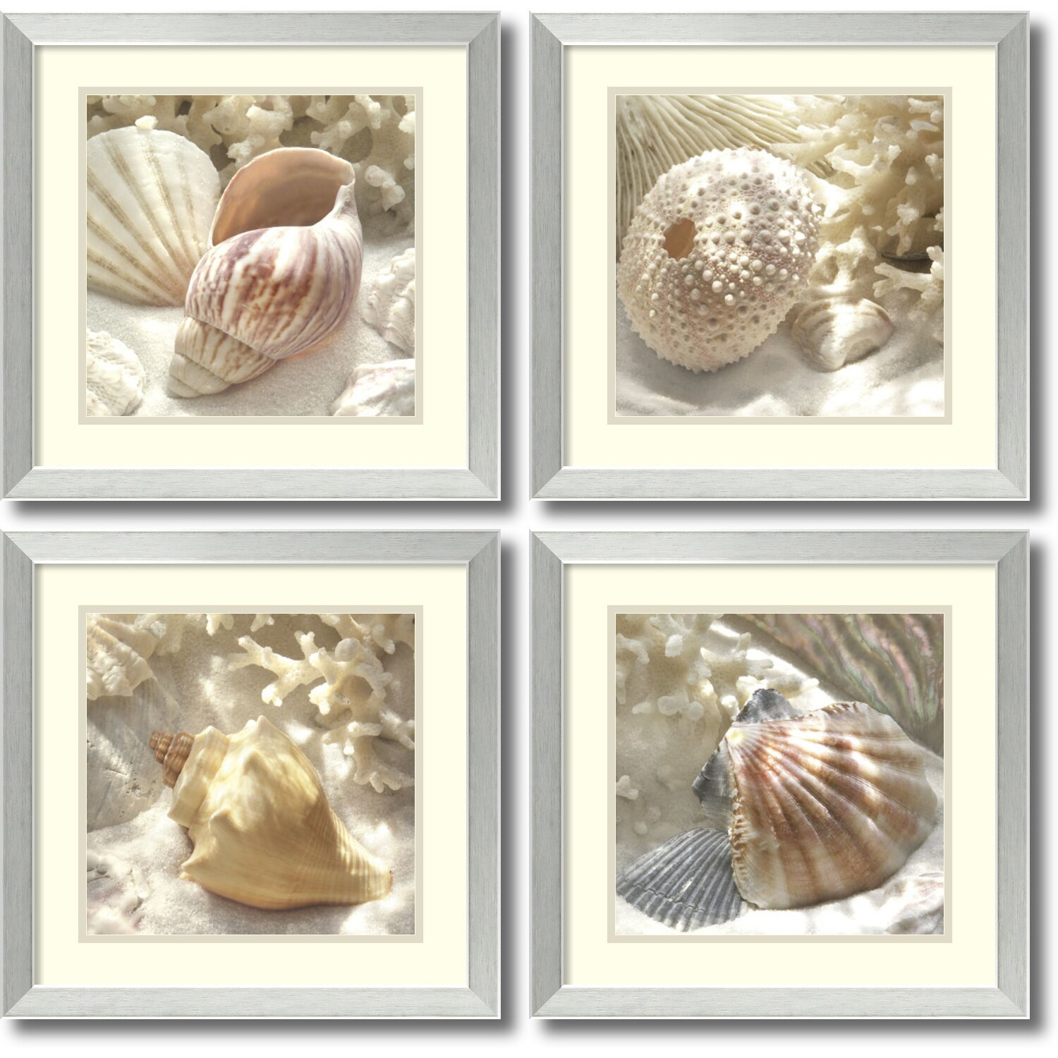 Rosecliff Heights Coral Shell By Donna Geissler 4 Piece