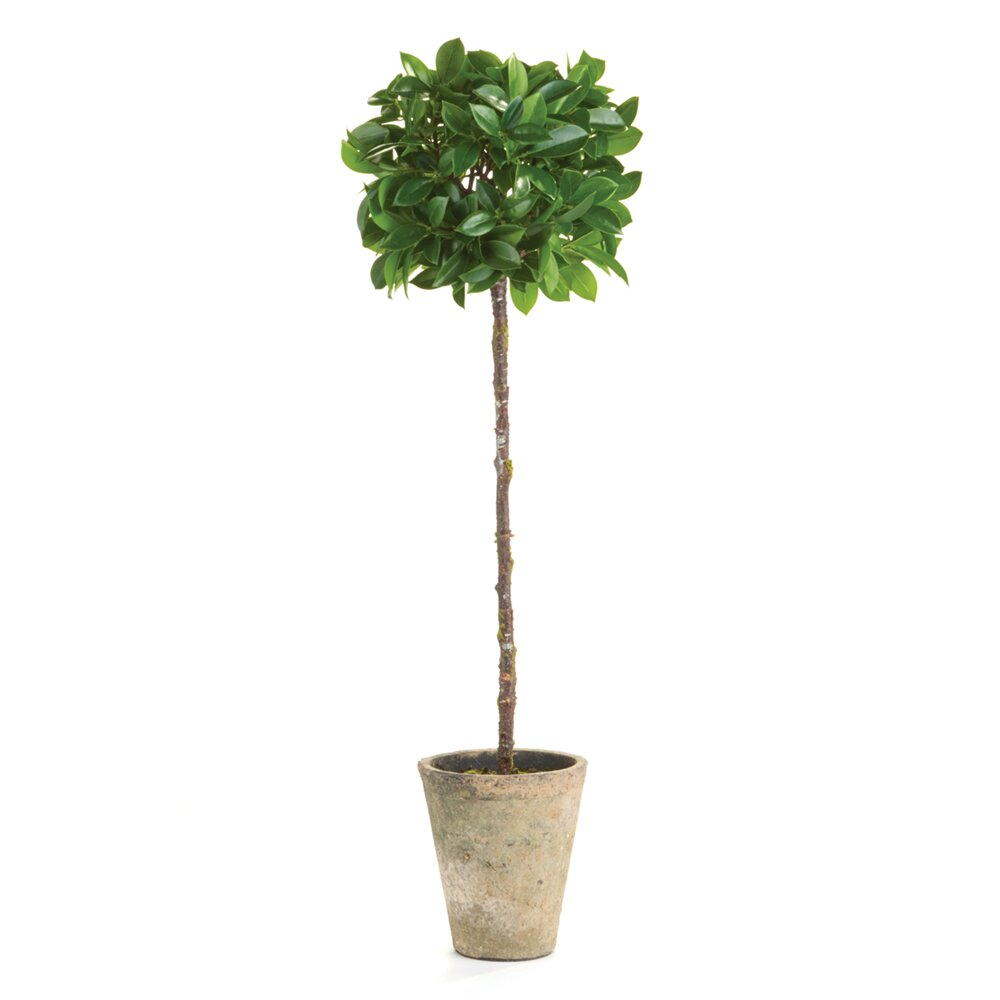 Laurel Foundry Modern Farmhouse Topiary Tree In Pot
